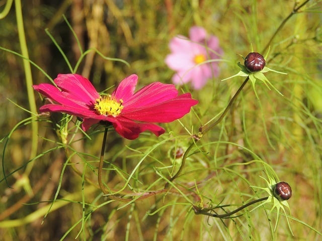 flower-59158_640.jpg