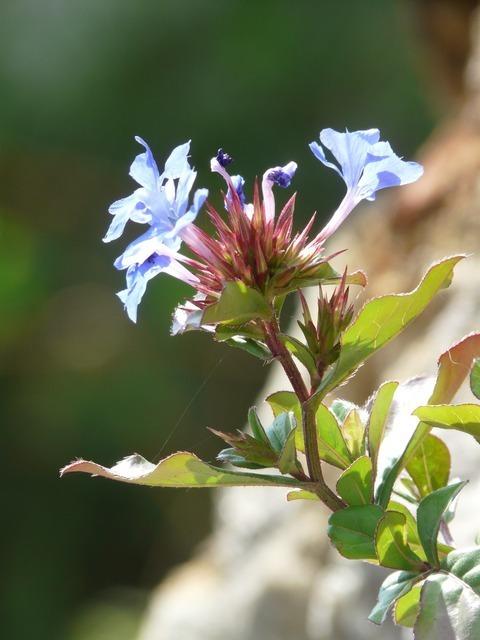 flower-604_640.jpg