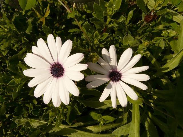 flower-605_640.jpg