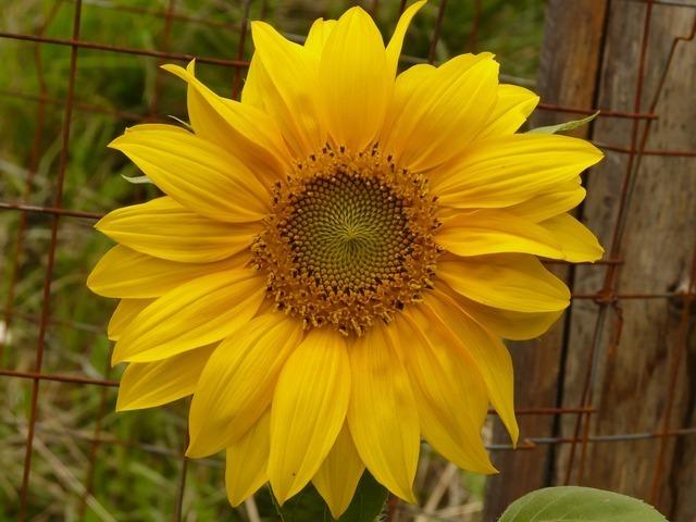 flower-624_640.jpg