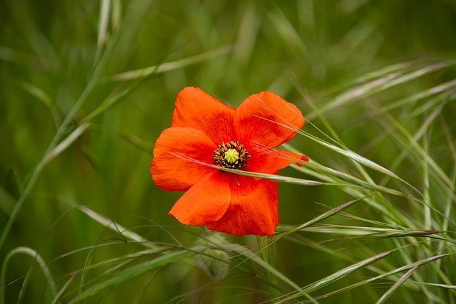 flower-6290130_640.jpg