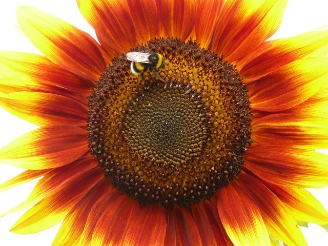 flower-634_640.jpg