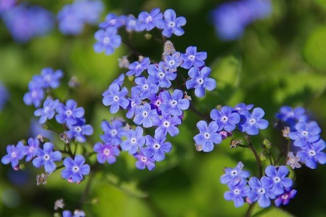 flower-64118_640.jpg