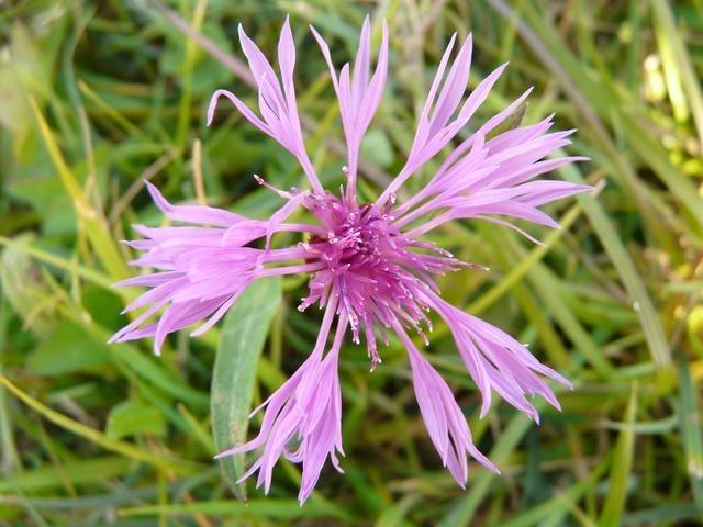 flower-844_640.jpg