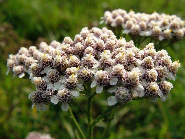 flowers-2873_640.jpg