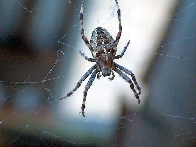garden-spider-59042_640.jpg