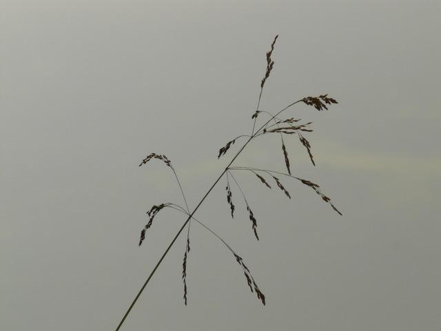 grass-573_640.jpg