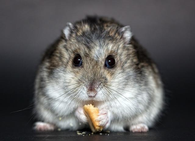hamster-1772742_640.jpg