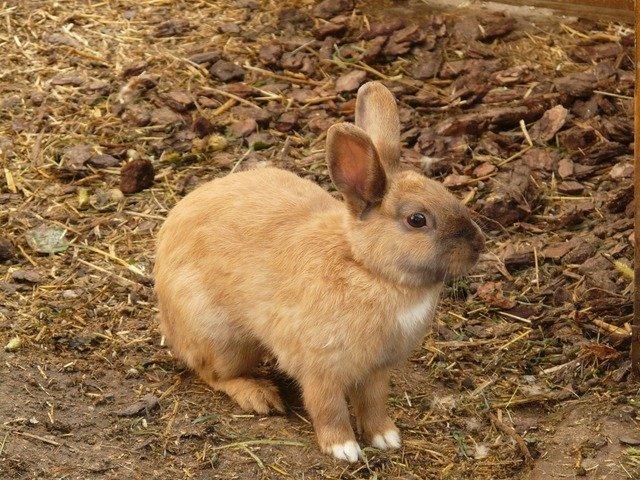 hare-580_640.jpg
