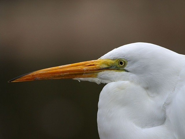 heron-head-3189_640.jpg