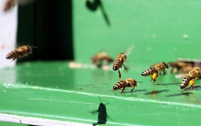 hive-2821_640.jpg