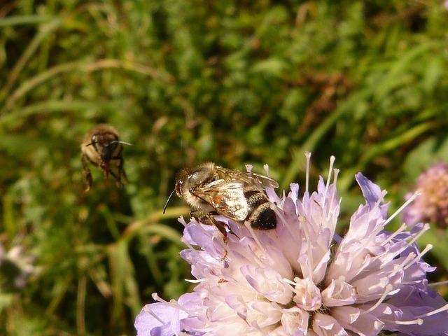 honey-bee-58423_640.jpg