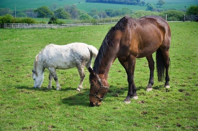 horse-1817_640.jpg