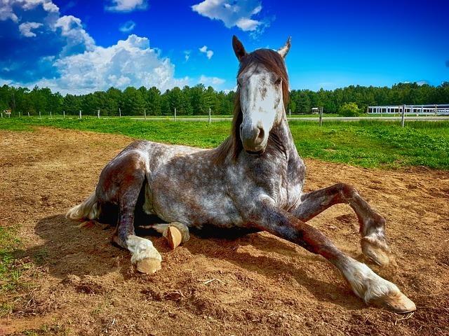 horse-2572051_640.jpg