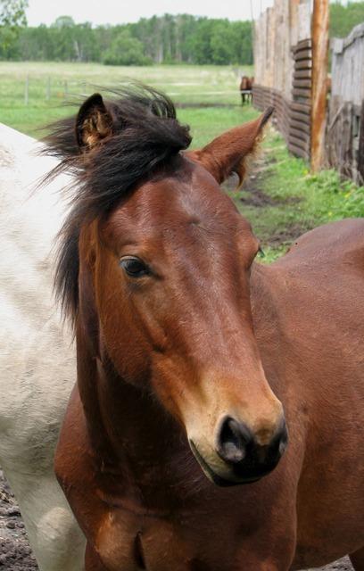 horse-2674_640.jpg