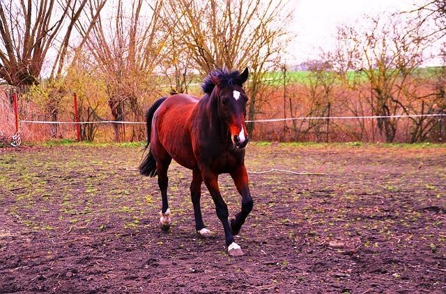 horse-334952_640.jpg