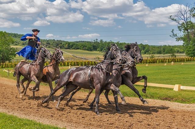 horses-394205_640.jpg