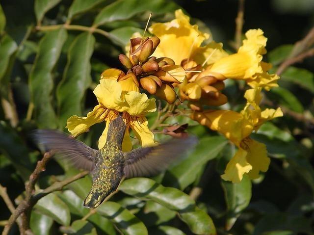 humming-bird-3202_640.jpg