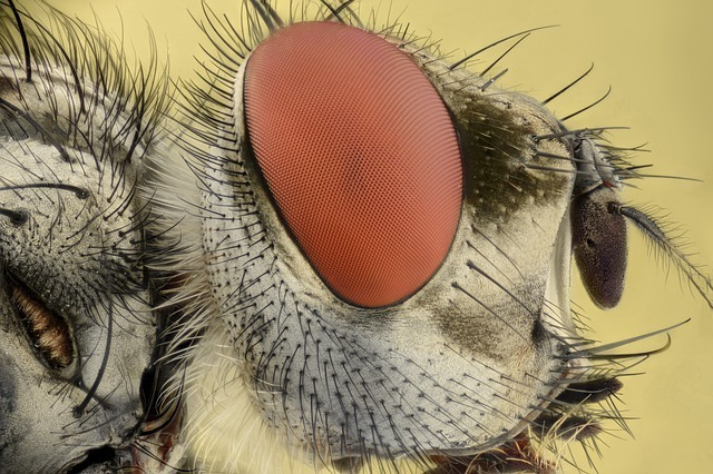 insect-2286749_640.jpg