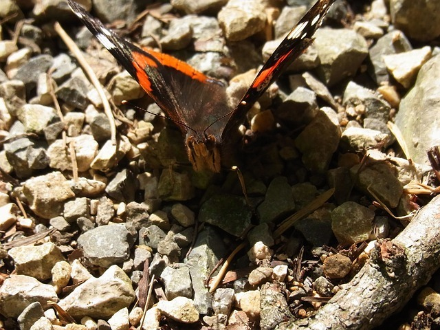 insect-54538_640.jpg