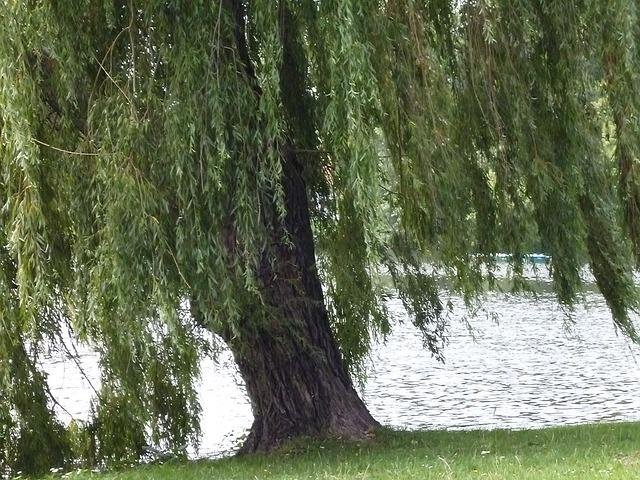 lake-58941_640.jpg