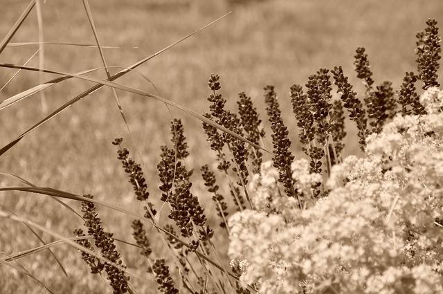 lavender-50211_640.jpg