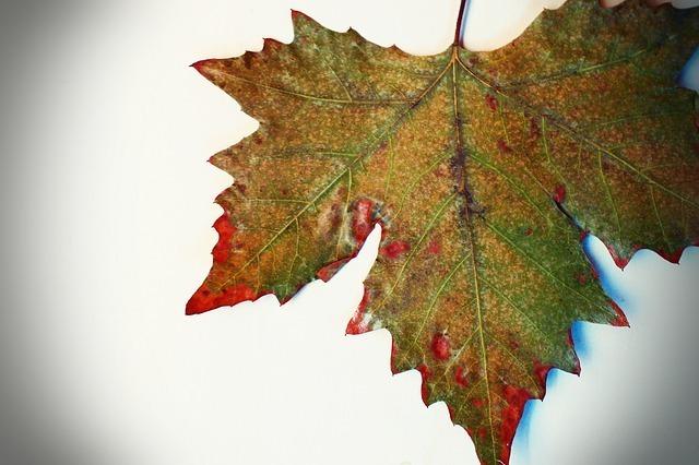 leaf-63573_640.jpg