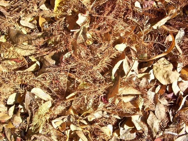 leaves-220_640.jpg
