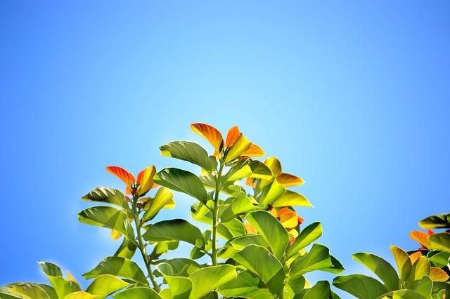 leaves-241701_640.jpg