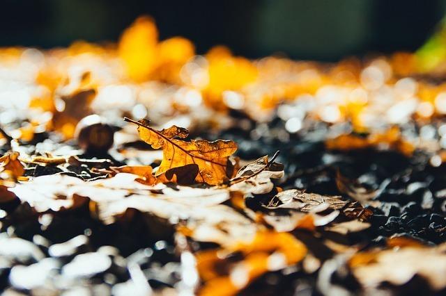 leaves-2812461_640.jpg