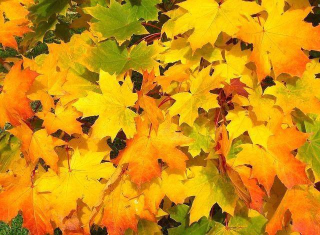 leaves-57427_640.jpg