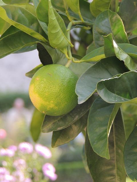 lemon-57835_640.jpg
