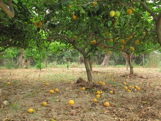 lemons-49064_640.jpg