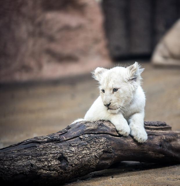 lion-2119447_640.jpg