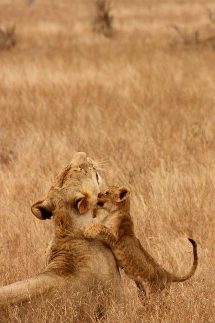 lion-2839_640.jpg