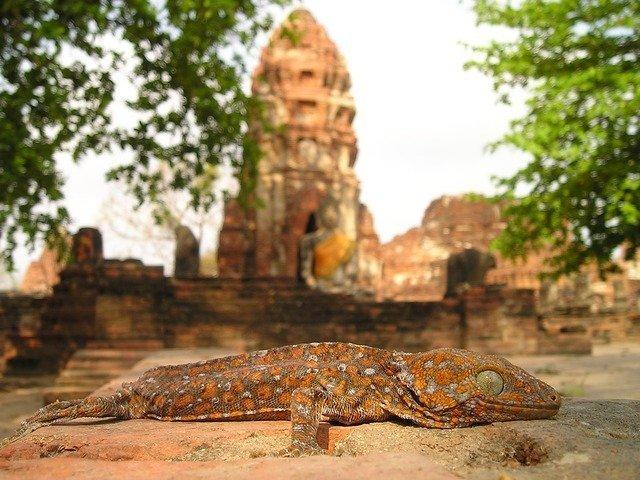 lizard-463_640.jpg