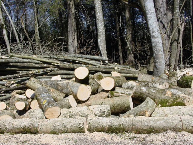 logging-1072_640.jpg