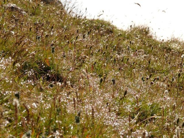 meadow-788_640.jpg