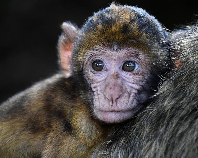 monkey-2790452_640.jpg