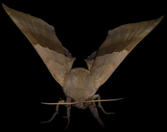 moth-1914_640.jpg