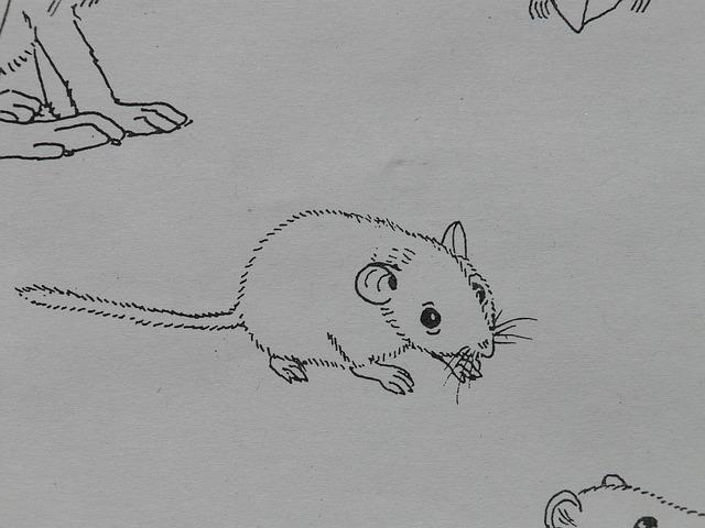 mouse-8776_640.jpg