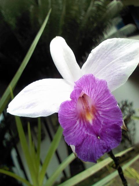 orquidea-56757_640.jpg