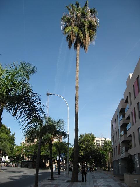 palm-56119_640.jpg