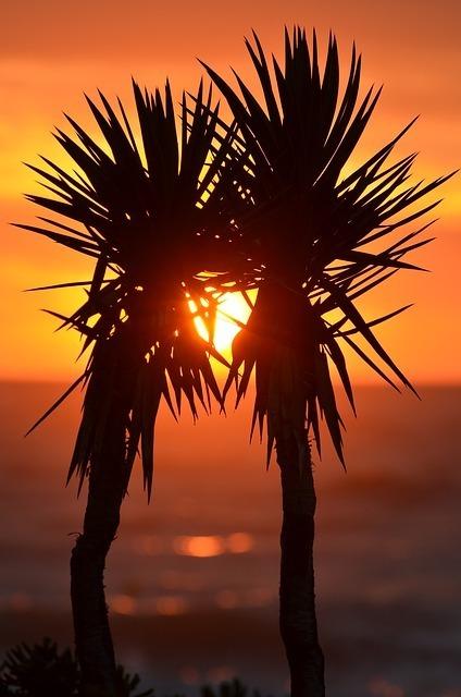 palm-trees-323350_640.jpg