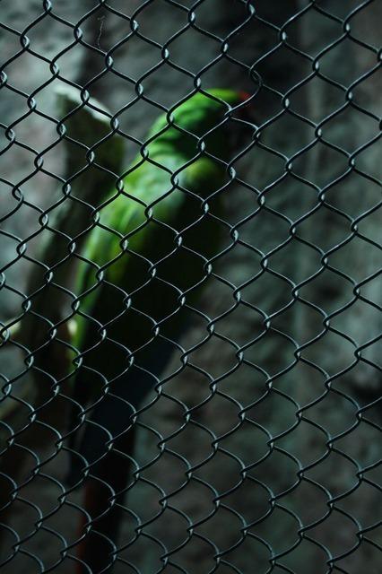 parrot-2234_640.jpg