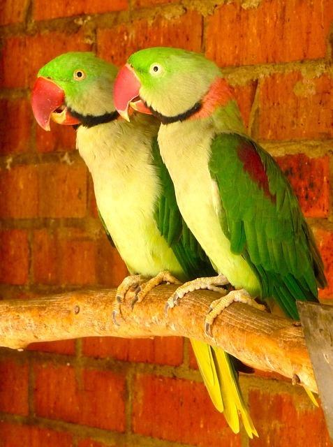 parrots-340284_640.jpg