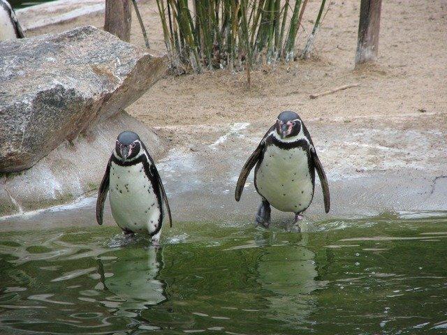 penguin-2505_640.jpg