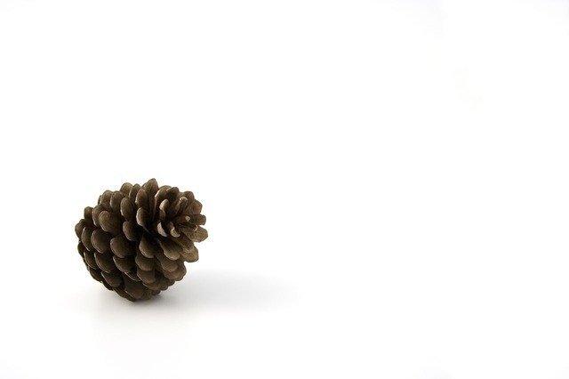 pine-1651_640.jpg