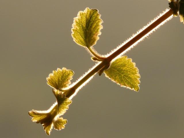 plant-781_640.jpg