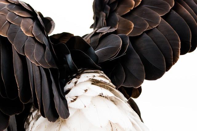 plumage-1728702_640.jpg